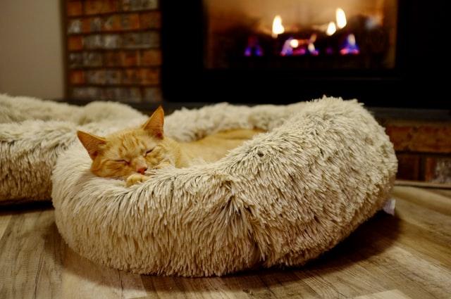 Katze vor Kamin